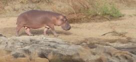 Safaripark Stukenbrock Gutschein: Tageskarte für 19,50 € bei Groupon