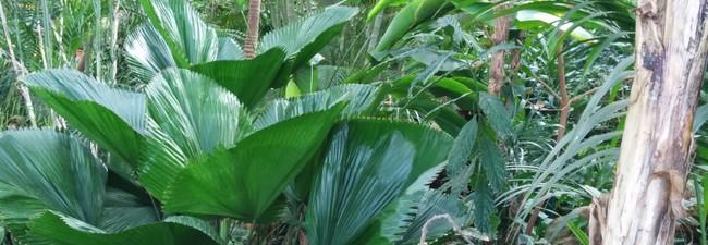 Tropical Islands Rabatt-Gutscheine: Günstigere Tickets für den Tropen-Kurzurlaub